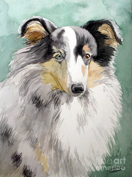Painting - Shetland Sheep Dog by Christopher Shellhammer