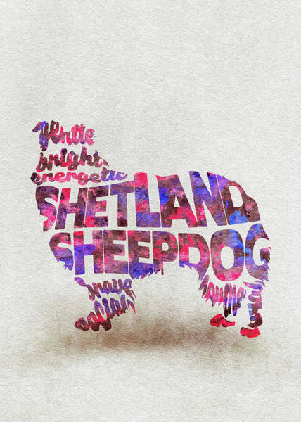 Painting - Shetland Sheepdog Watercolor Painting / Typographic Art by Inspirowl Design