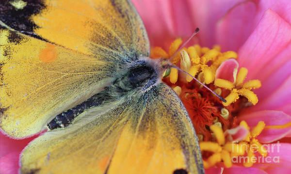 Photograph - Shhhhh . . . Butterfly At Work by Karen Adams