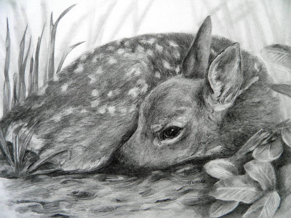 White Tailed Deer Drawing - Shhhhh... by Meagan  Visser