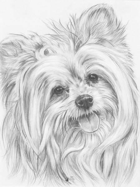 Mutt Drawing - Shi-chi by Barbara Keith