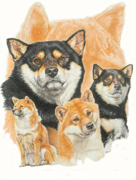 Mixed Media - Shiba Inu Medley by Barbara Keith