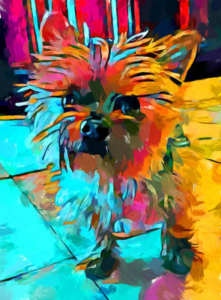 Wall Art - Painting - Shih Tzu 3 by Chris Butler