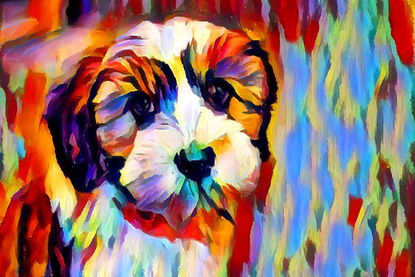 Wall Art - Painting - Shih Tzu by Chris Butler