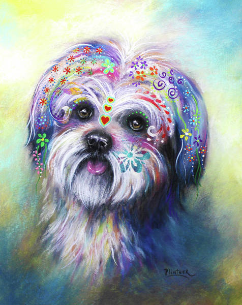 Husky Mixed Media - Shih Tzu by Patricia Lintner