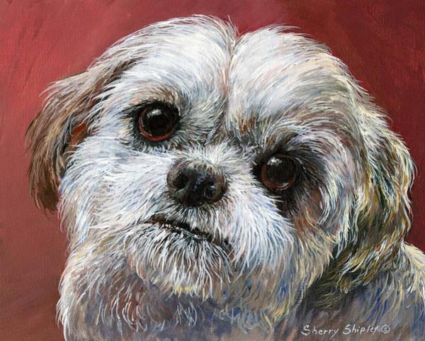 Painting - Shih Tzu by Sherry Shipley
