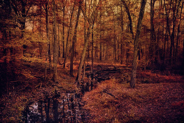 Photograph - Shiloh Creek 4 by Jai Johnson