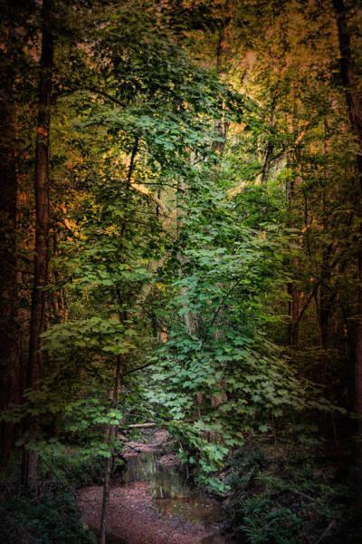 Photograph - Shiloh Stream 1 by Jai Johnson