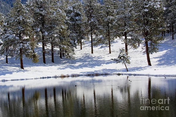 Photograph - Shimmering Duck Pond In Colorado Snow by Steve Krull