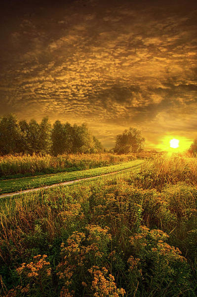 Photograph - Shine Down On Another Day by Phil Koch