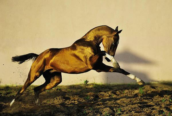Wall Art - Photograph - Shooting Golden Hawk by Artur Baboev