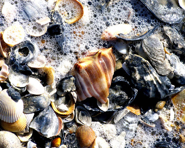 Carole King Photograph - Shore Shell Collection by Carole King
