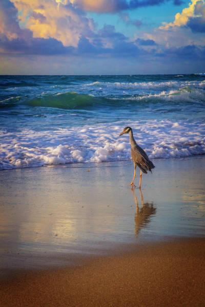 Photograph - Shorebird by Debra and Dave Vanderlaan