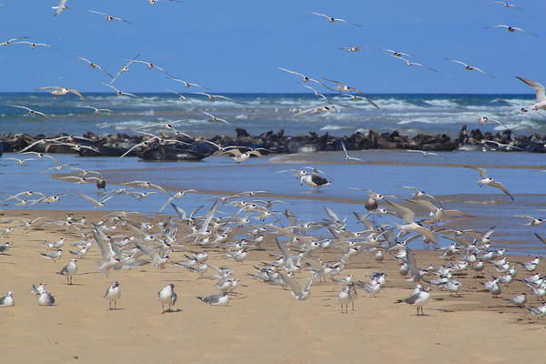 Wall Art - Photograph - Shorebirds And Seals Cape Cod Head Of The Meadow Truro by John Burk