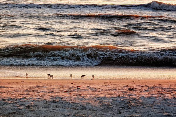 Photograph - Shorebirds by Lars Lentz