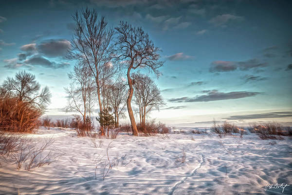 Great Lakes Region Wall Art - Digital Art - Shoreline Trees by Phill Doherty