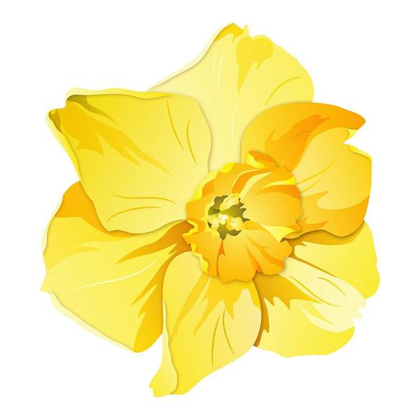 Digital Art - Short Trumpet Daffodil In Yellow by MM Anderson