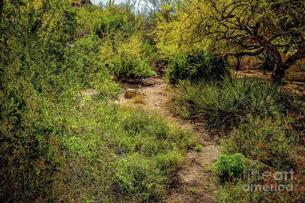 Photograph - Shortcut by Jon Burch Photography