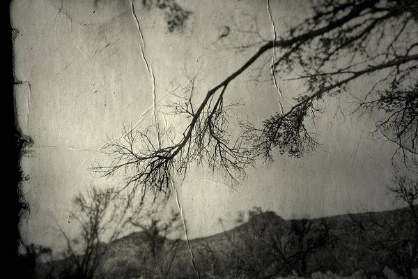 Photograph - Show Me  by Mark Ross