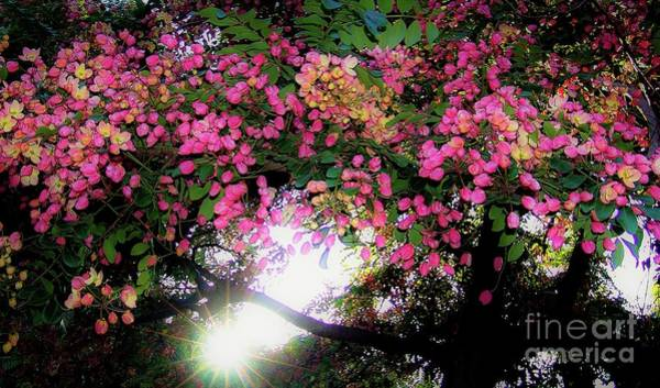 Shower Tree Flowers And Hawaii Sunset Art Print
