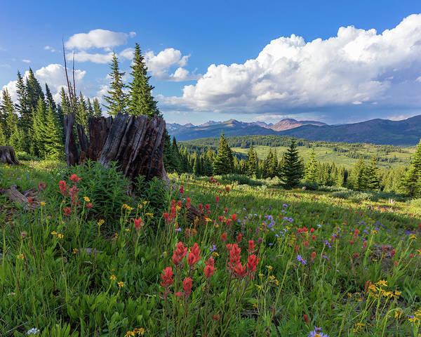 Alpine Meadows Photograph - Shrine Ridge Alpine Wildflowers Surround A Dead Tree Stump by Bridget Calip