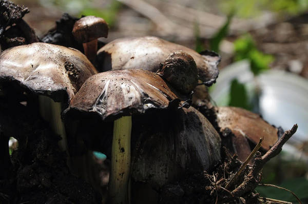 Shrooms Photograph - Shrooms by Bill Cannon