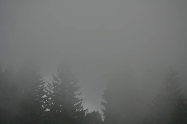 Photograph - Shrouded Conifers by Dylan Punke