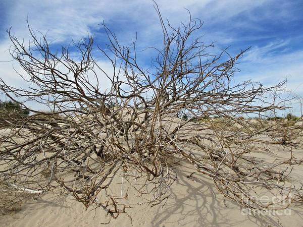 Photograph - Shrub In The Dunes Near San Fernando by Chani Demuijlder