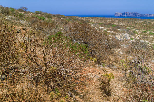 Photograph - Shrubs On Imeri Gramvousa by Sun Travels