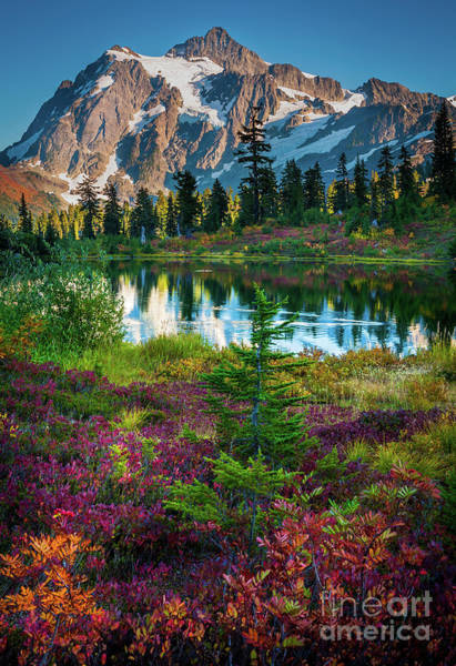 Evergreens Photograph - Shuksan Autumn by Inge Johnsson