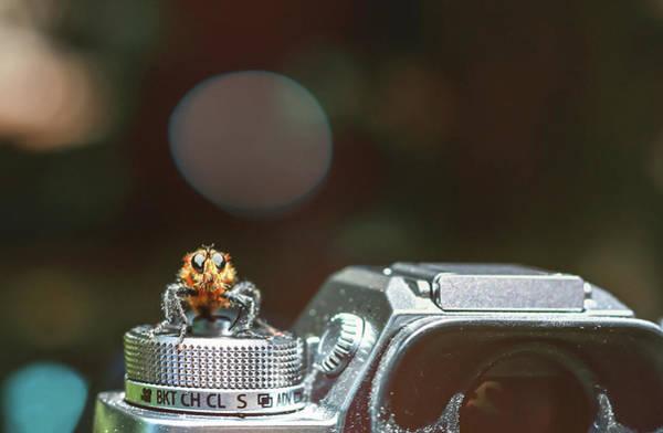 Photograph - Shutterbug- by JD Mims