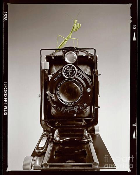 Photograph - Shutterbug Mantis by Martin Konopacki