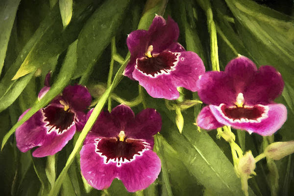 Photograph - Shy, Confident, Tentative And Awkward Orchids by Penny Lisowski