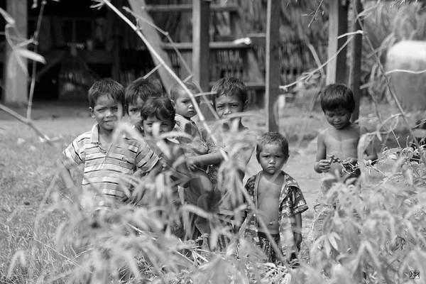 Photograph - Shy Curiosity by John Meader