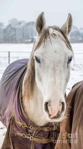 Photograph - Shy Horse by Marina Usmanskaya