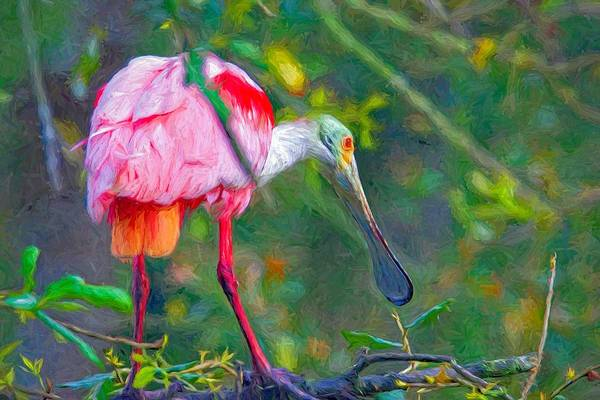 Photograph - Shy Spoonbill by Alice Gipson