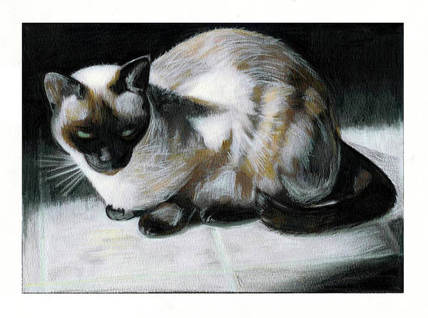 Colored Pencil Drawings Painting - Siamese Cat by Turtle Caps
