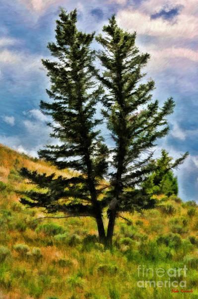 Photograph - Siamese Tree's by Blake Richards