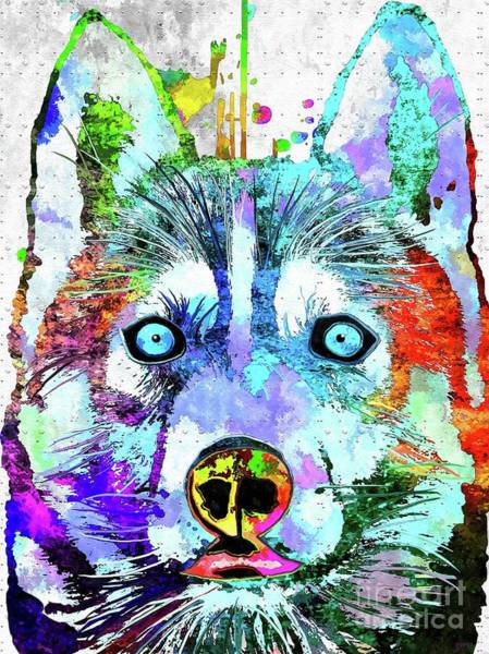Husky Mixed Media - Siberian Husky Grunge by Daniel Janda
