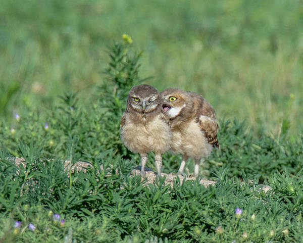 Photograph - Sibling Harassment by Judi Dressler