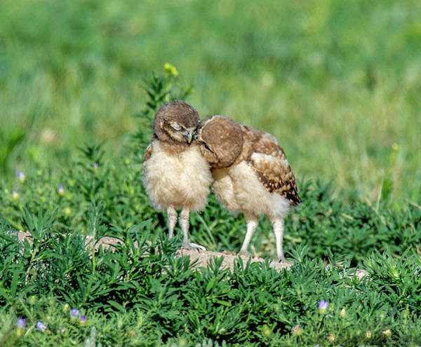 Photograph - Sibling Love by Judi Dressler