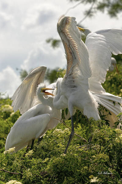 Photograph - Sibling Squabble by Christopher Holmes