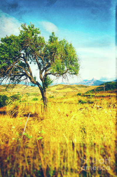 Photograph - Sicilian Landscape With Tree by Silvia Ganora