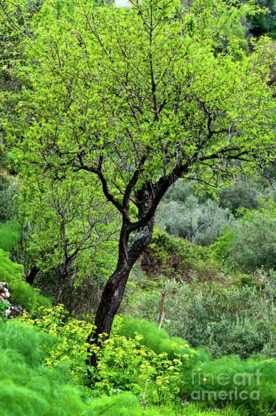 Photograph - Sicilian Spring by Silva Wischeropp