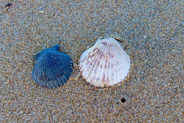 Photograph - Side By Side Shells by Brian Eberly