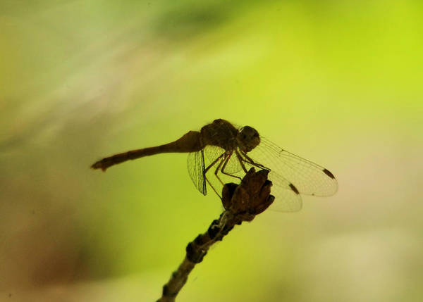 Wall Art - Photograph - Side View Of A Day Dreaming Dragonfly  by Jeff Swan