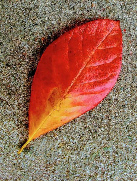 Photograph - Sidewalk Autumn Leaf by Roger Bester