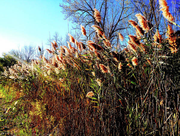 Photograph - Sidewalk Rushes by Roger Bester