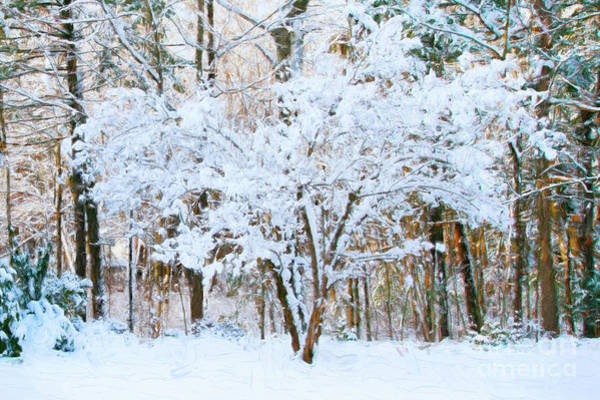 Photograph - Siebold Viburnum In Snow by Anita Pollak