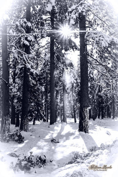 Photograph - Sierra Forest Show by William Havle